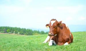 牛を育てる